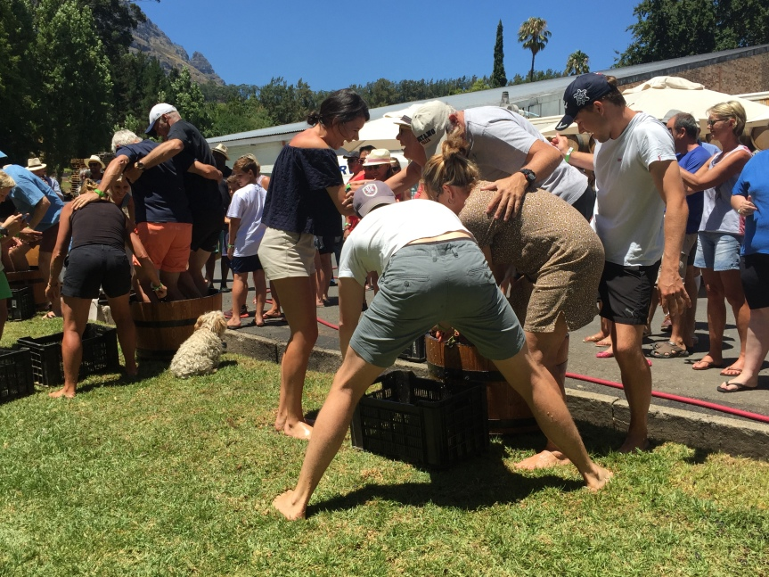 Grape Fun – Stomping Well Worth the Journey!