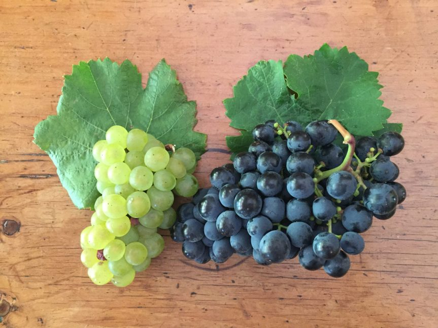 Grape Fun with Chardonnay and Shiraz